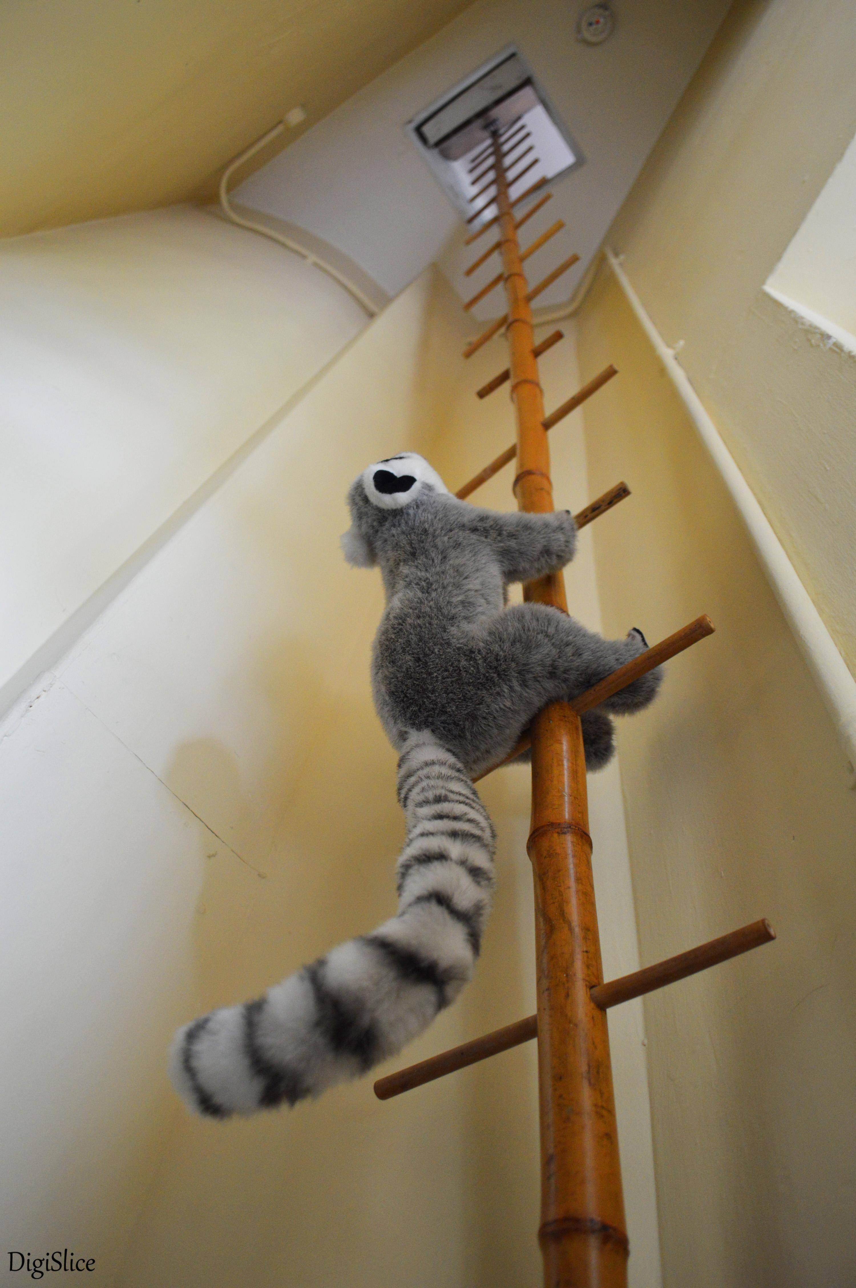 Eltham Palace lemur