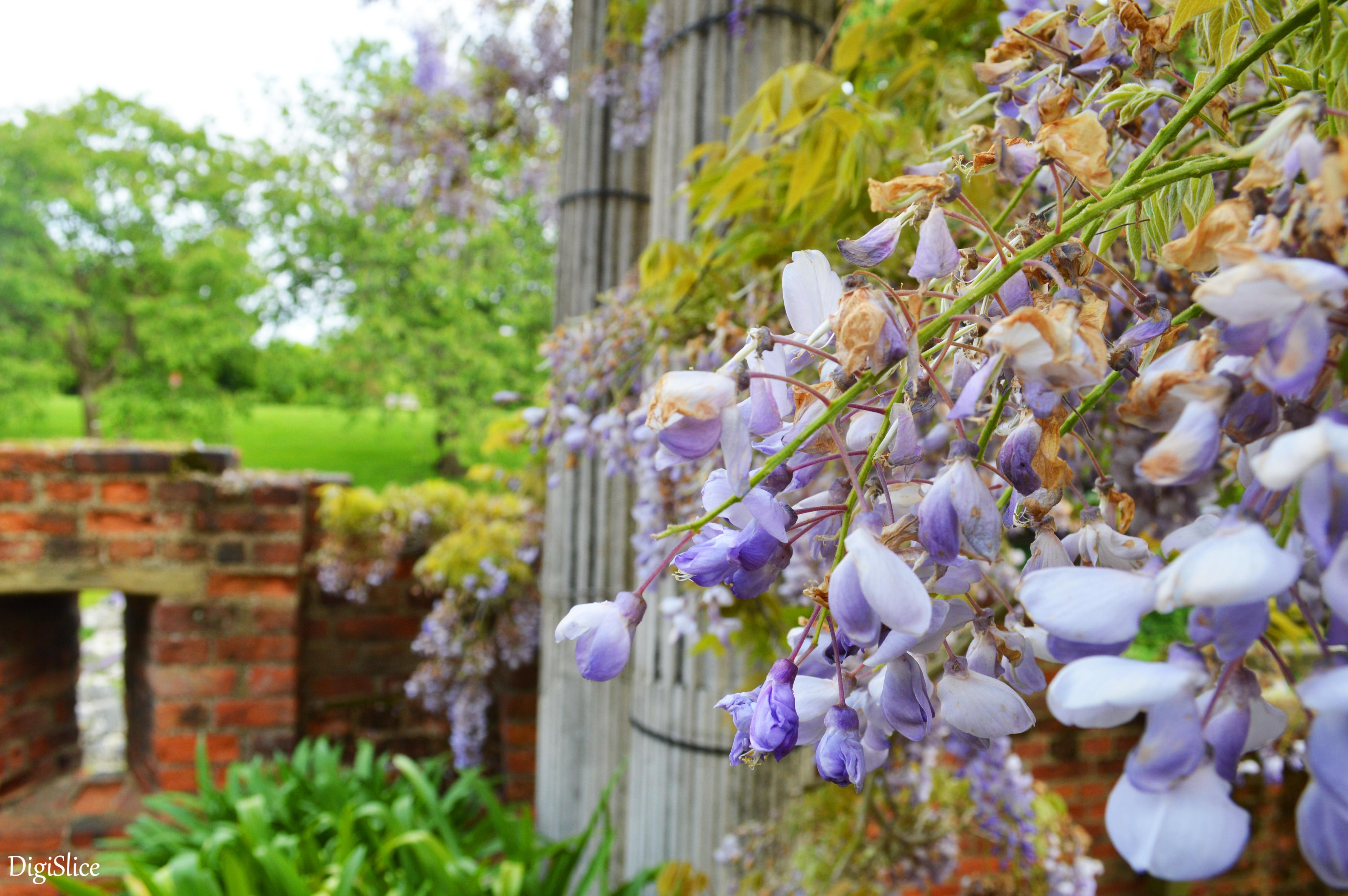 Eltham Palace garden