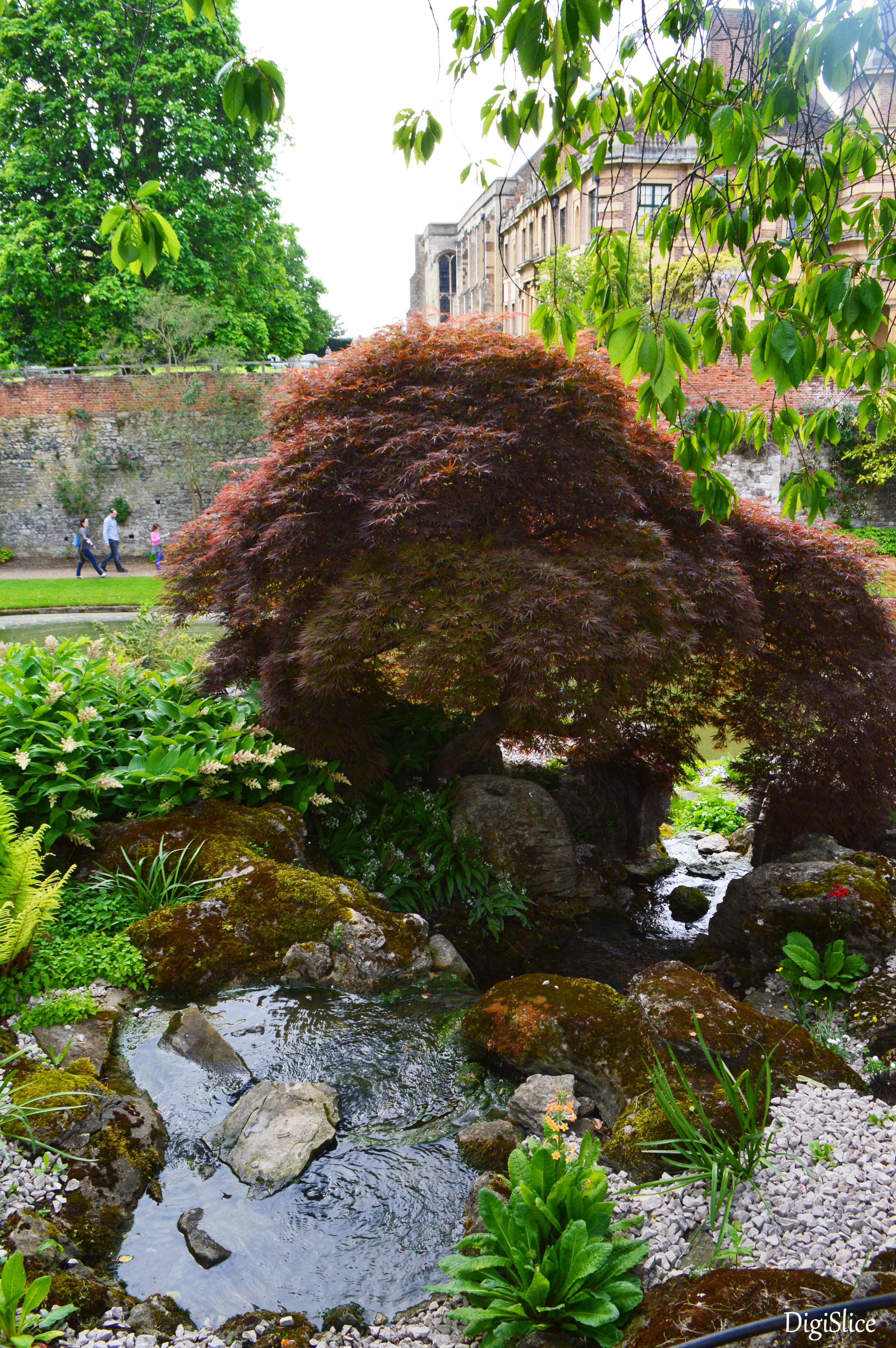 Rock Garden, Eltham Palace